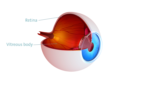 Retina-Surgery